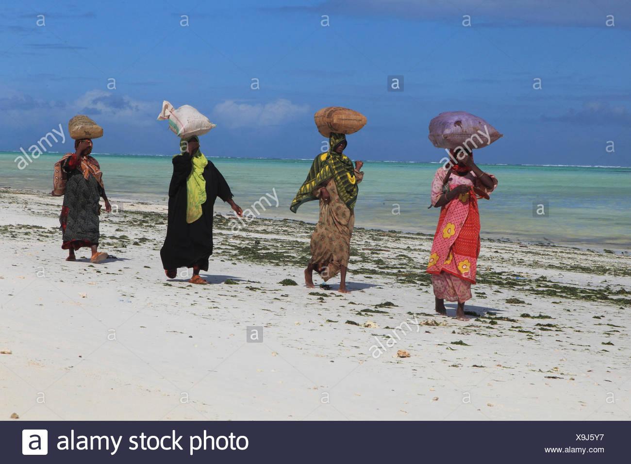 women carrying sacks with seaweeds on their heads, Tanzania, Sansibar - Stock Image