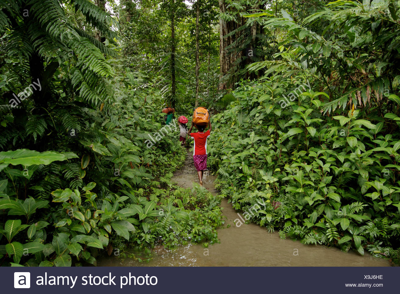 Female porters hike to base camp through flooded forest. - Stock Image