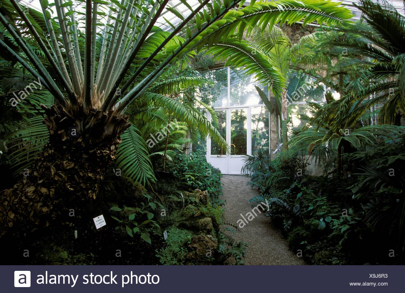 Palm glasshouse, Botanical Garden, Munich, Bavaria, Germany, Europe - Stock Image