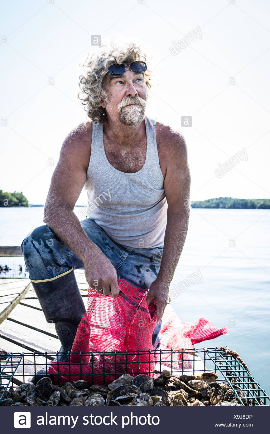 An oyster fisherman bags up oysters from a holding pen in the river. Stock Photo