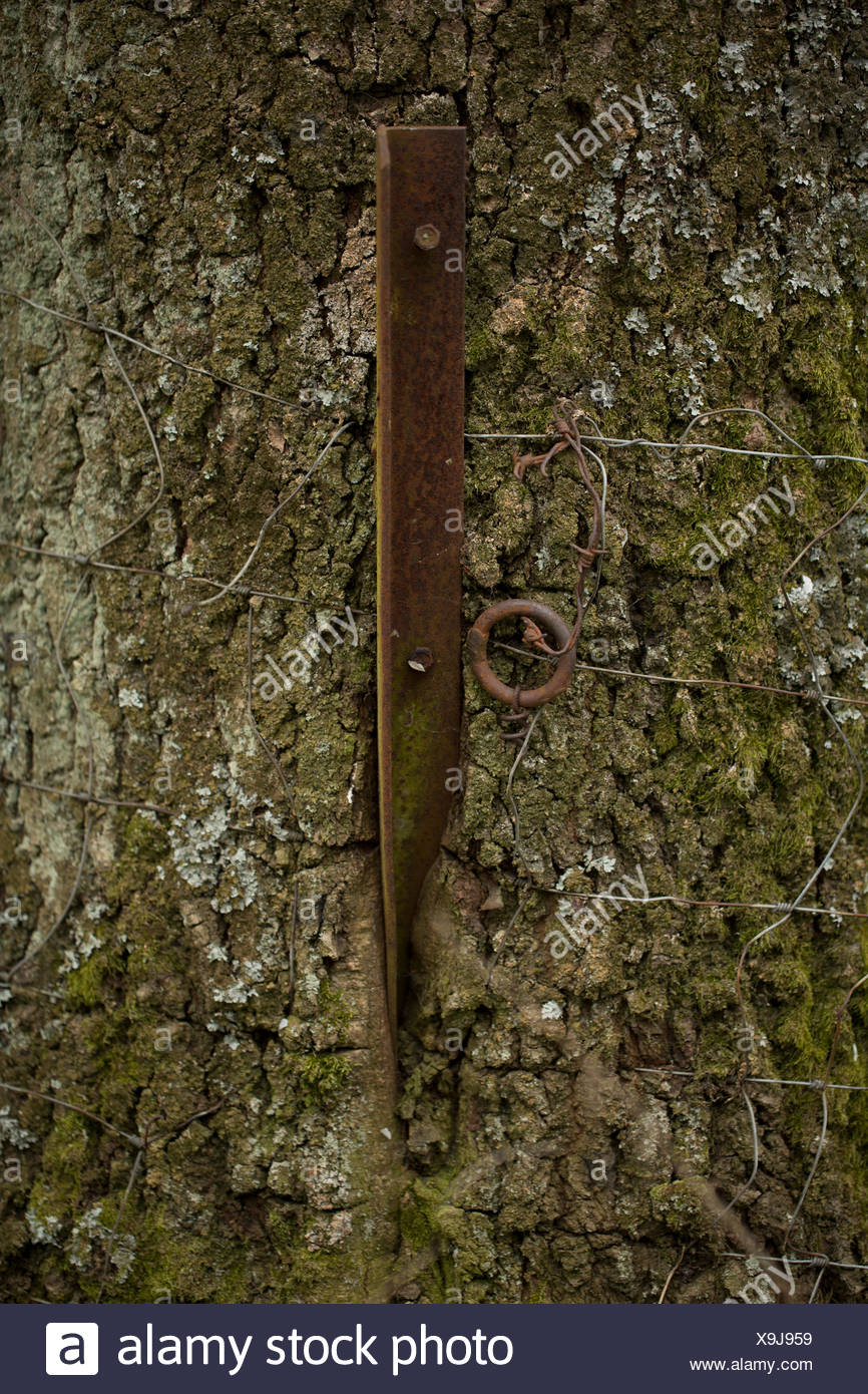 Rusty steel fence post grown into a treetrunk. Rhoen Mountains, Germany - Stock Image