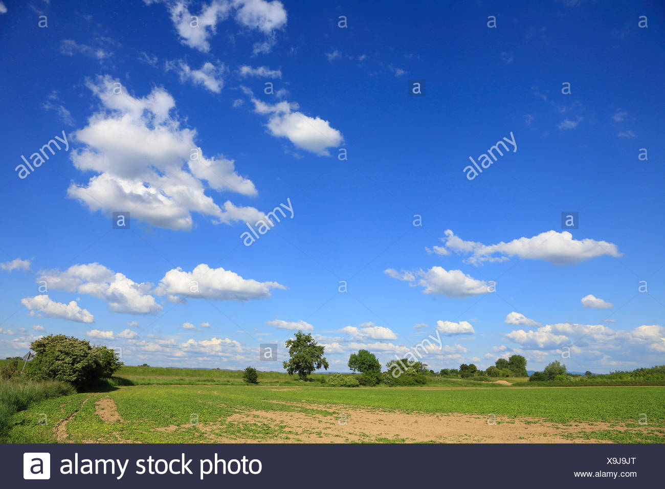 river flood plains in spring, Germany, Baden-Wuerttemberg, Mannheim Stock Photo