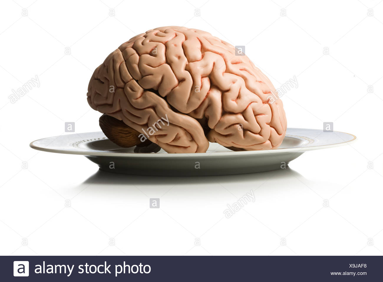 brain on a plate - Stock Image