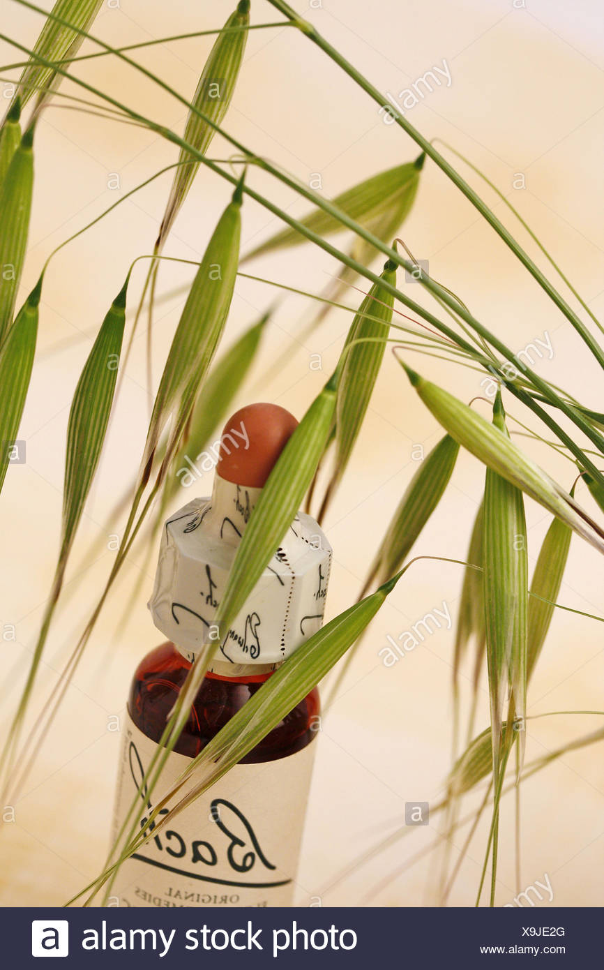 Wild oat. Bach´s floral remedy Stock Photo
