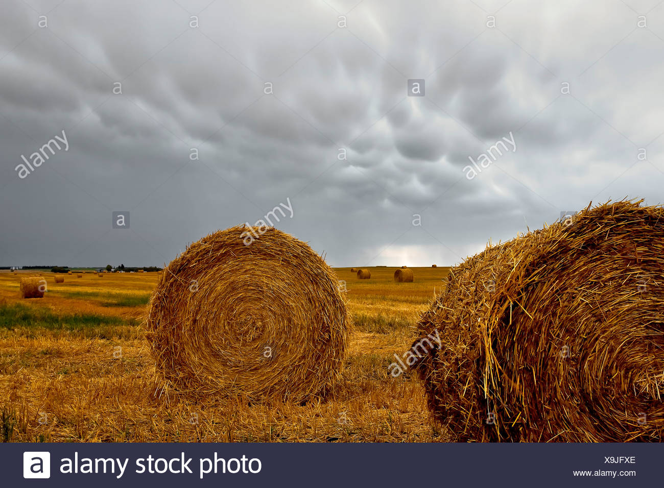 Hay bails and mammatus cloud formations. St. Leon, Manitoba, Canada. - Stock Image