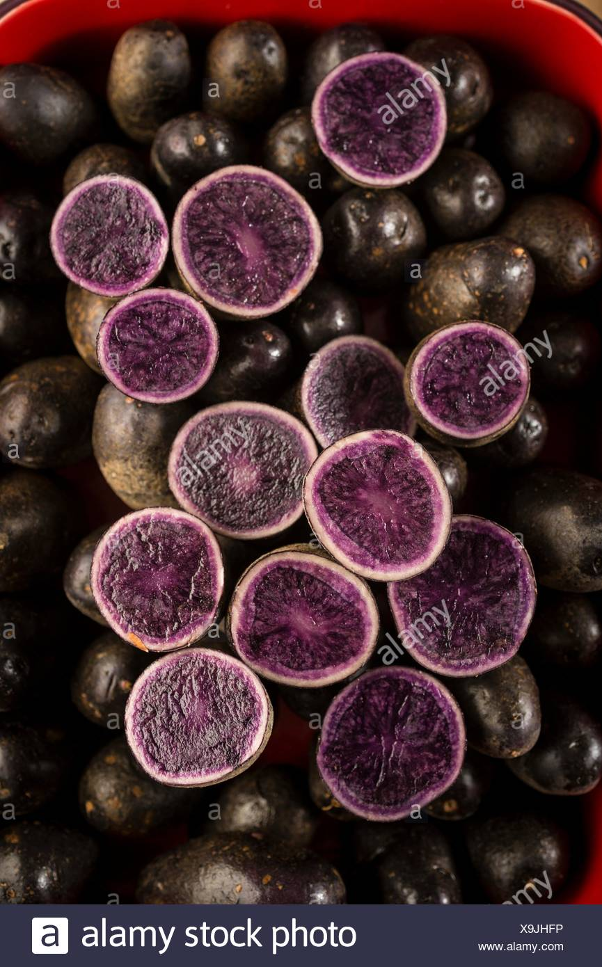 nobody, no one, no-one, healthy eating, fresh, food, food and drink, produce, vegetables, high angle view, high angle, raw, purple, blue, studio shot, studio shots, half, blaue st galler potato, potatoes, still life - Stock Image