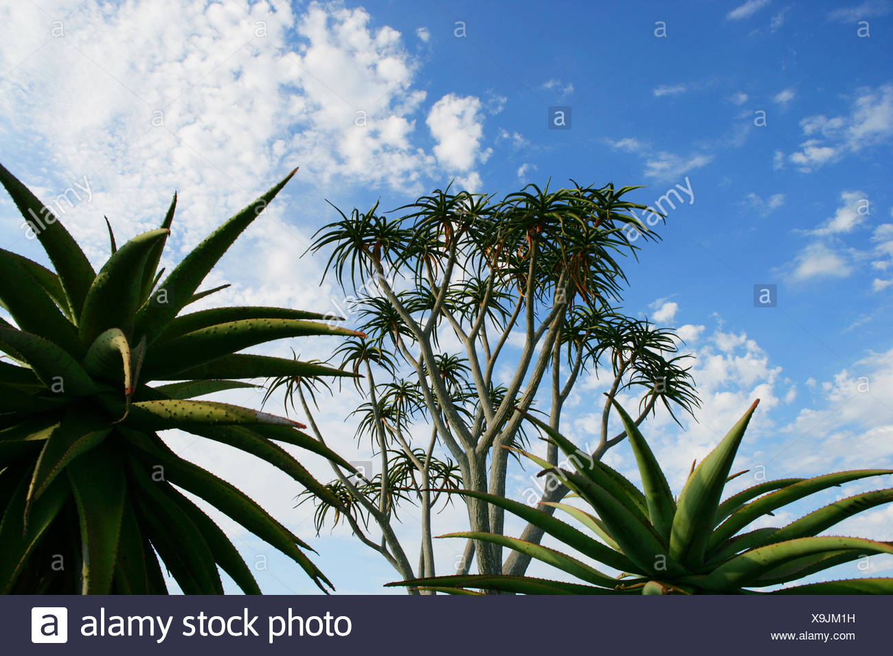 Low angle view of plants against cloudy sky - Stock Image