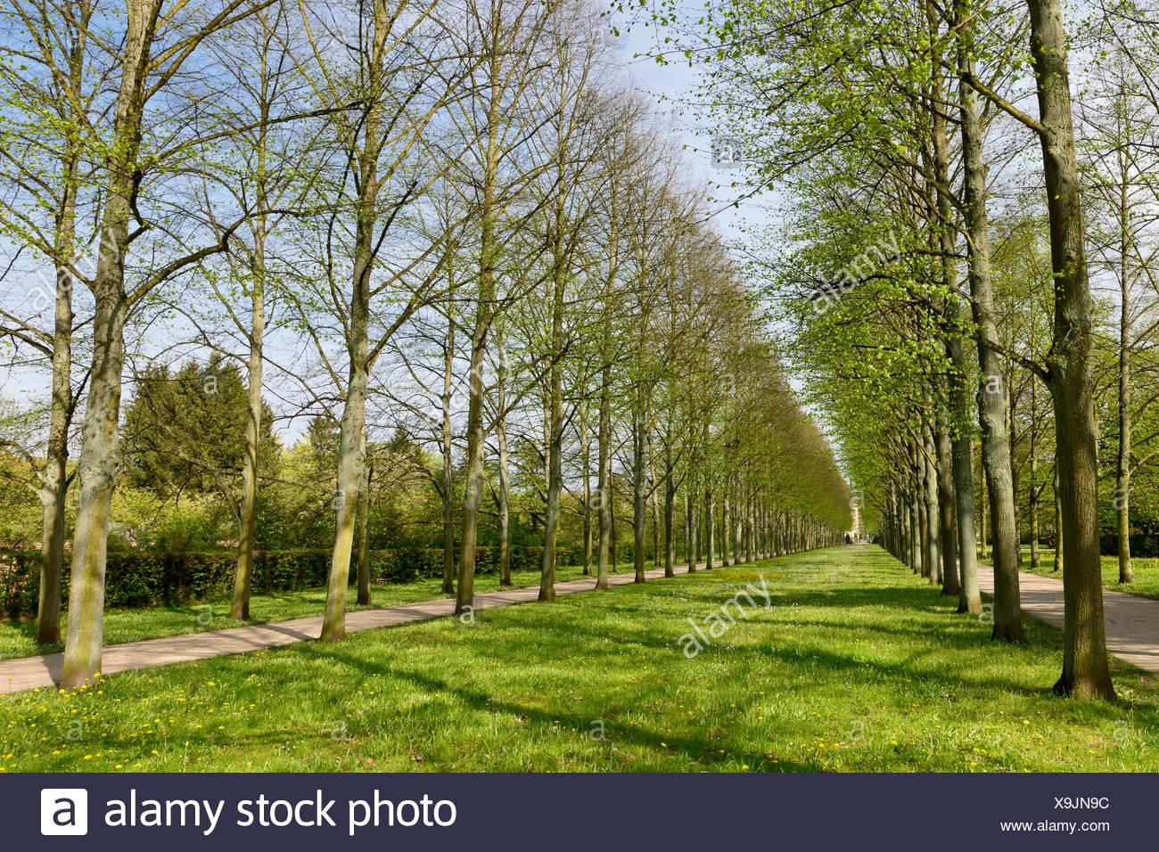 Avenue Of Lime Trees Park Franzosischer Garten French Garden