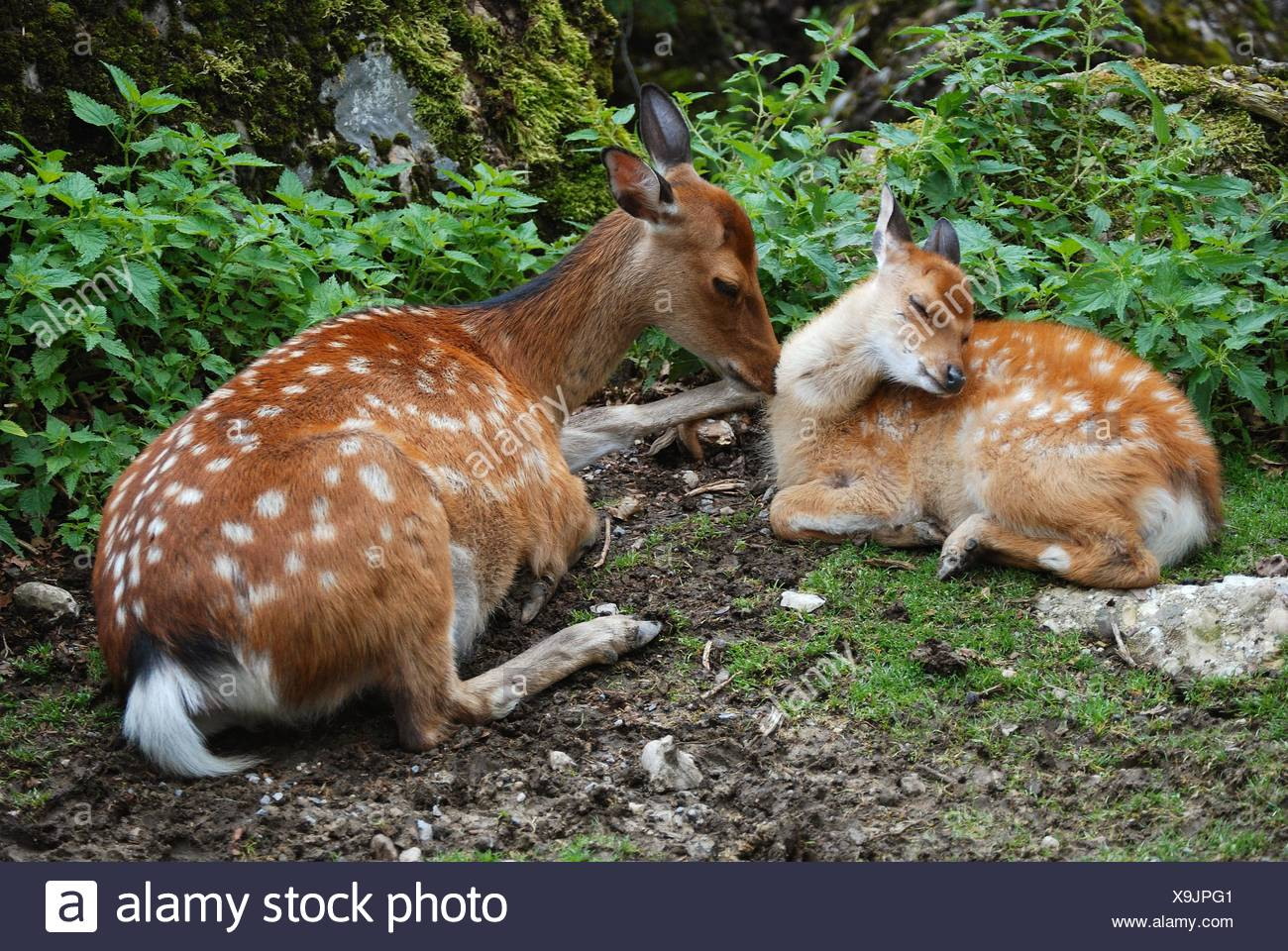 mammals - Stock Image
