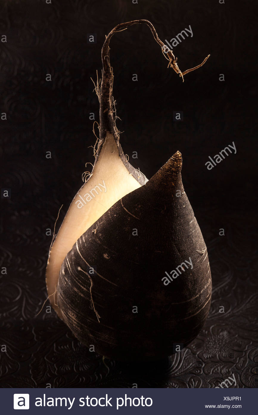 Black Winter Radish (Raphanus sativus var. niger) Stock Photo