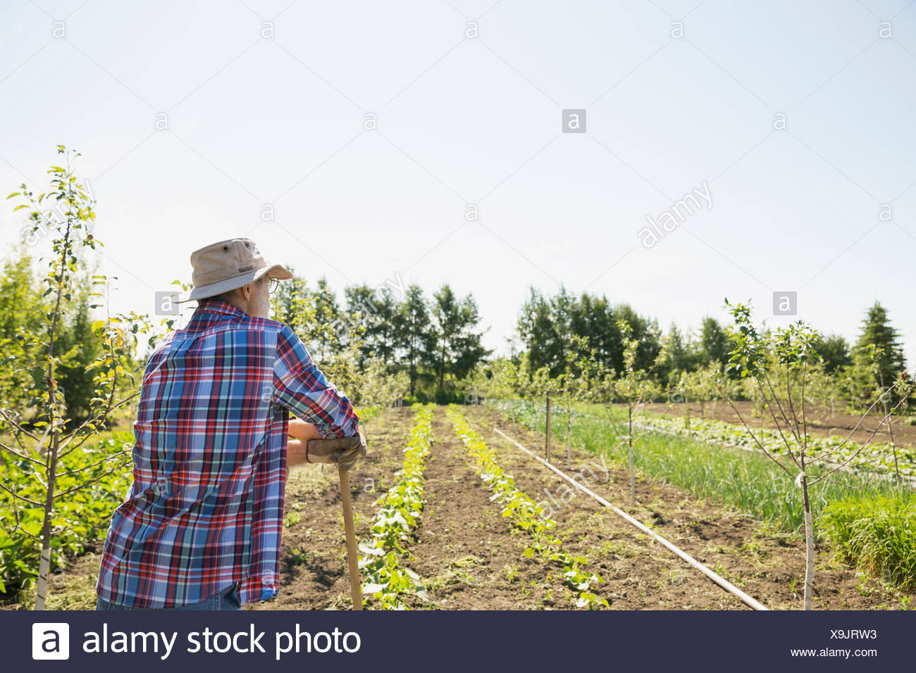 Farmer looking out at sunny garden - Stock Image