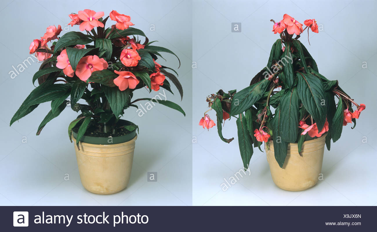 Droopy Plant Stock Photos Droopy Plant Stock Images Alamy