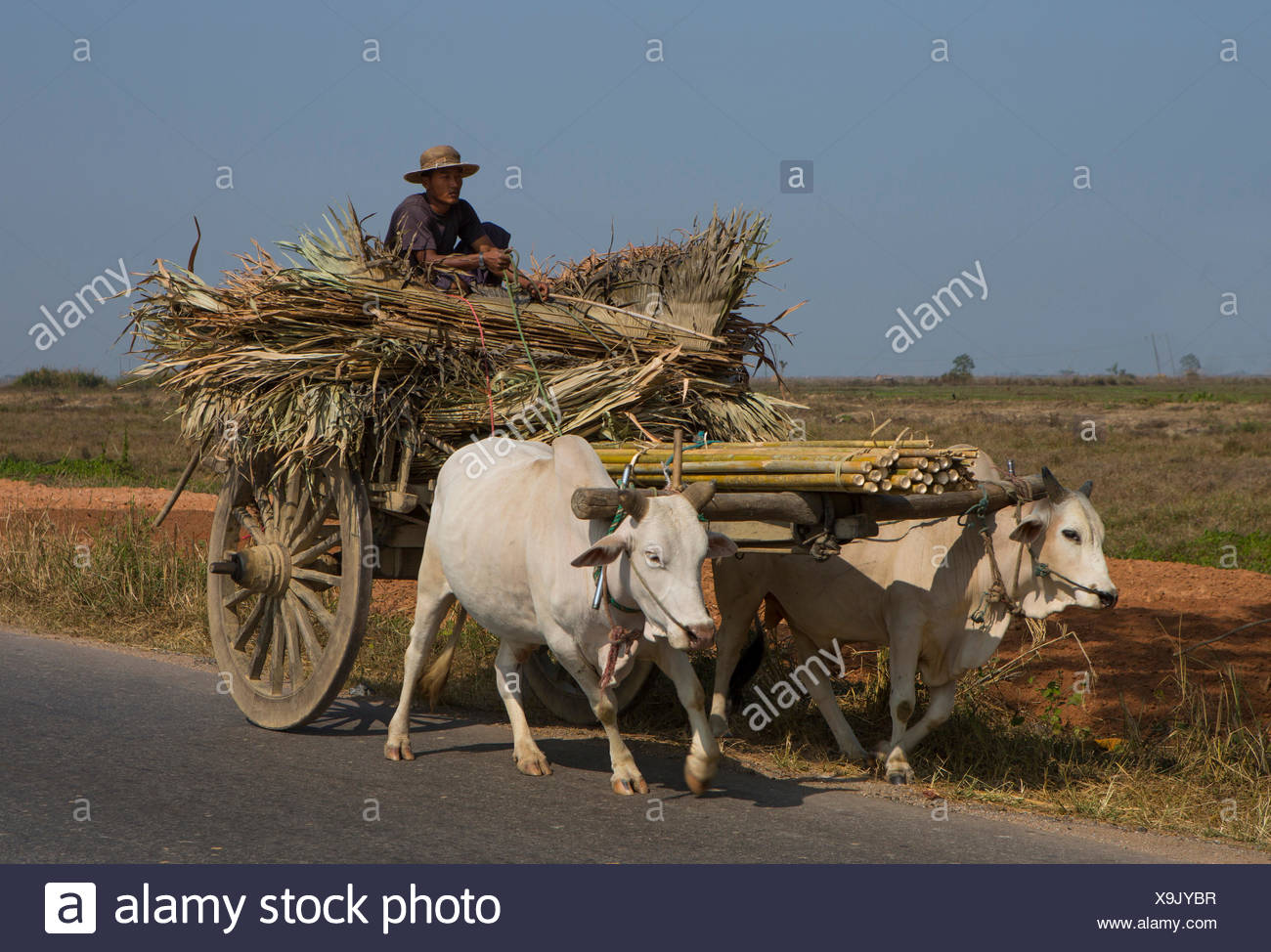Mon, Myanmar, Burma, Asia, colourful, cows, lorry, ox cart, people, road, transport, agriculture, - Stock Image