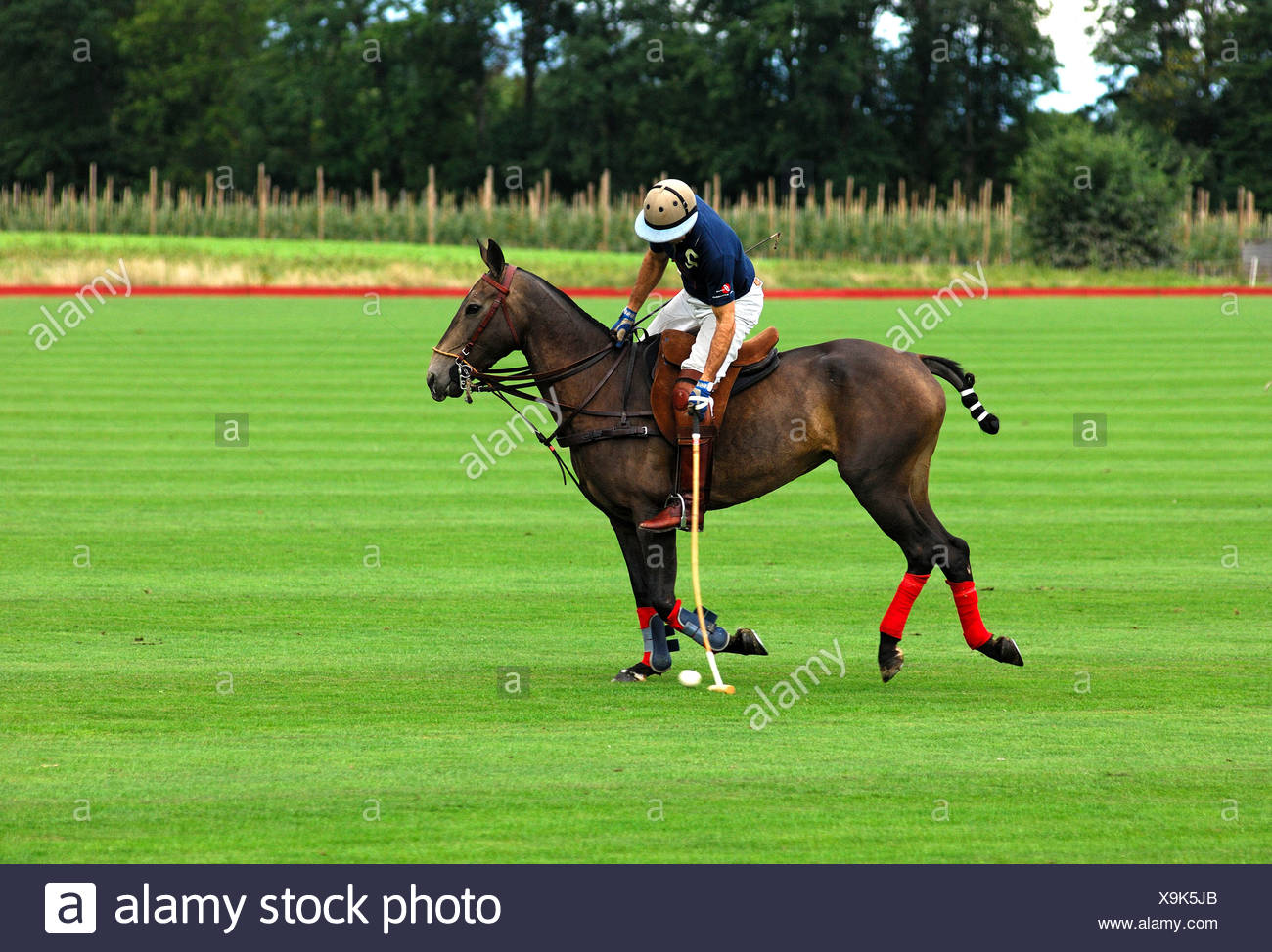 Polo player hitting the ball, polo, equestrian sport - Stock Image