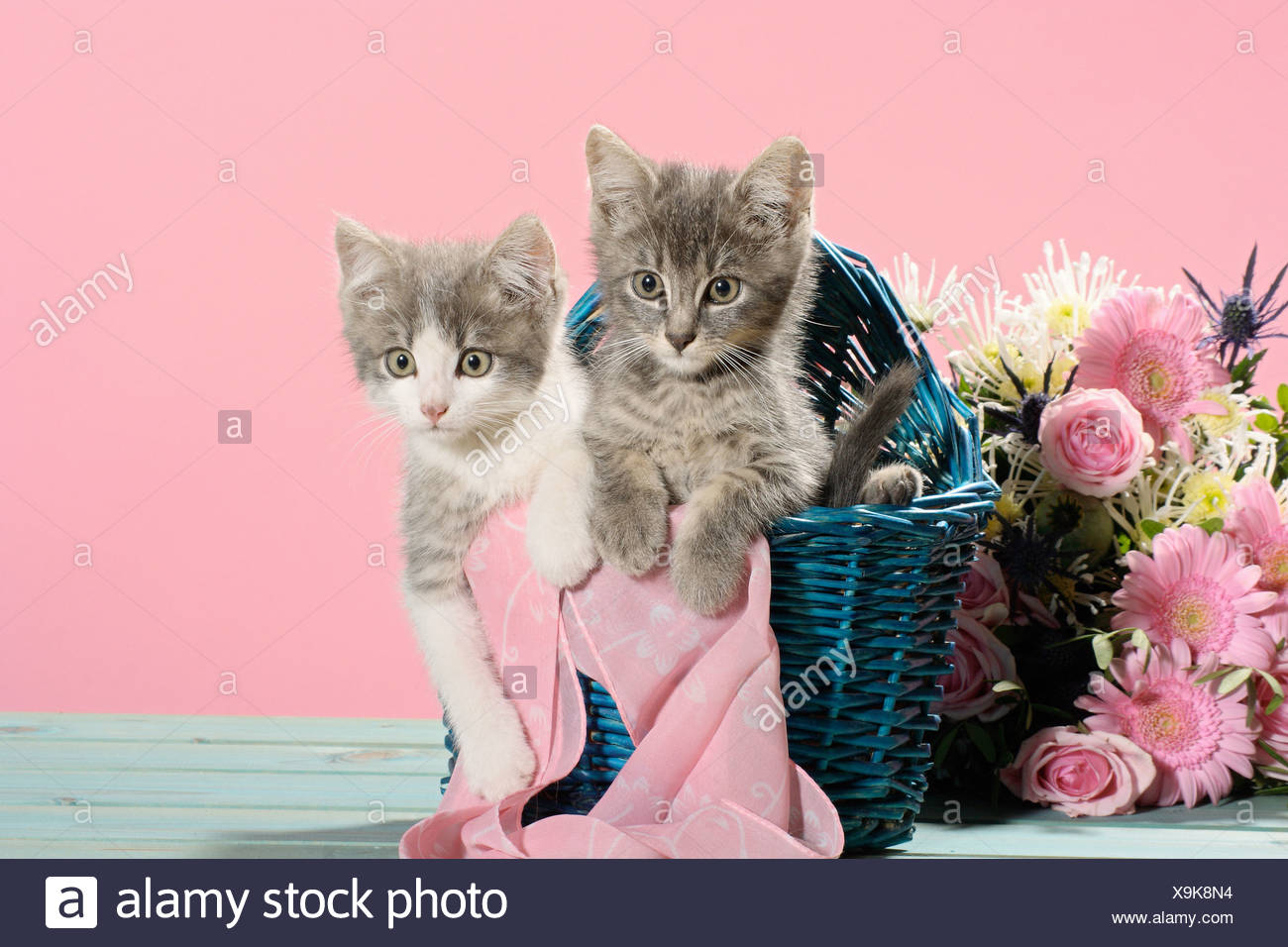 domestic cat - two kittens in a basket next to a flower bouquet ...