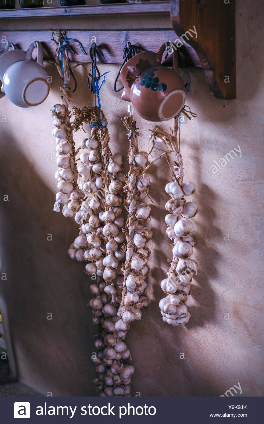 Garlic drying and hanging on the wall in rustic vintage kitchen - Stock Image