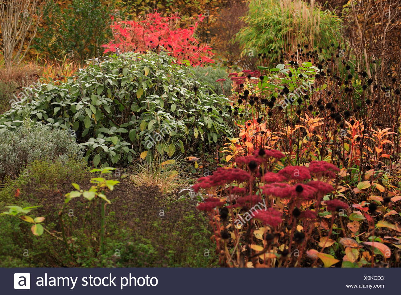 Autumn atmosphere - Stock Image