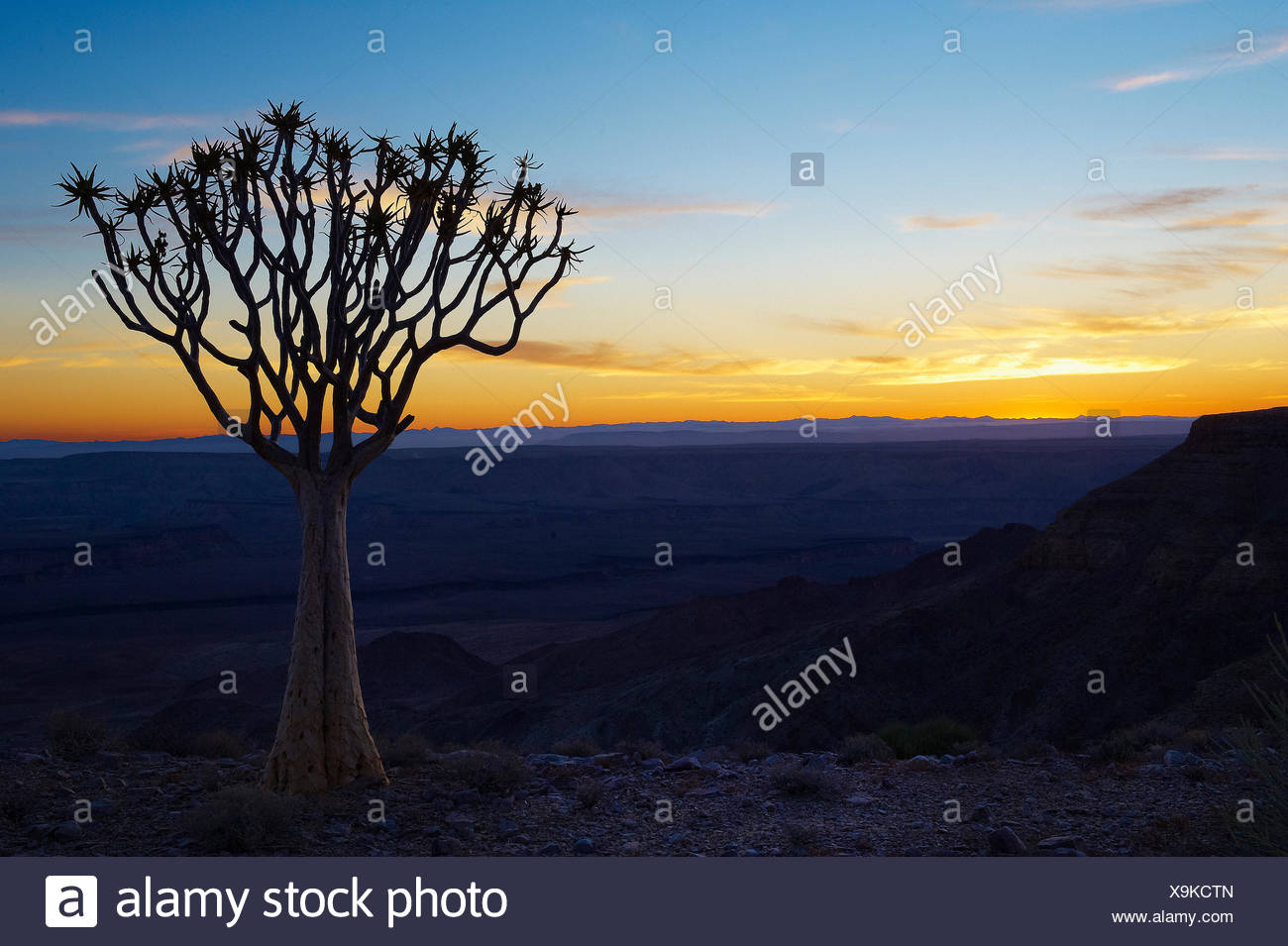 Africa, blue hour, cliff, Fish River, quiver tree, Namibia, sunrise, tree, Stock Photo