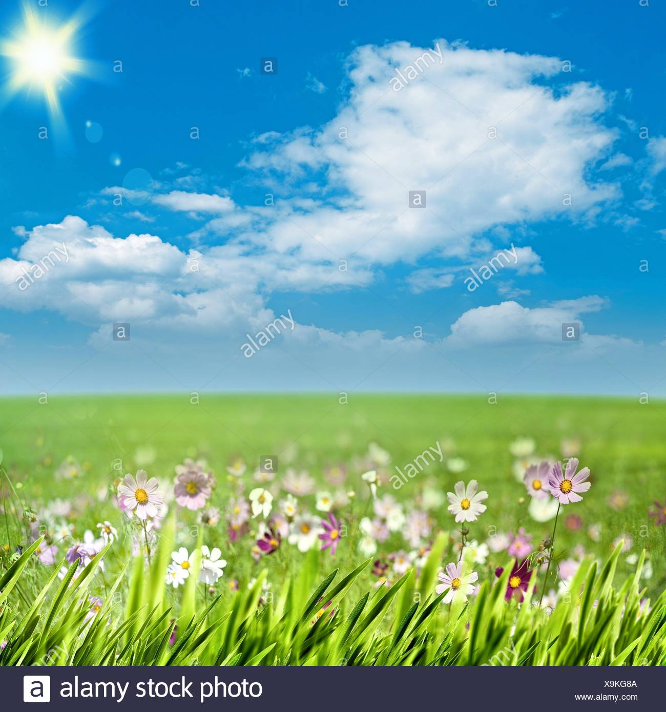 grass and sky backgrounds. Beautiful And Beauty Meadow With Flowers And Green Grass Under Blue Skies Seasonal  Backgrounds Throughout Grass And Sky Backgrounds