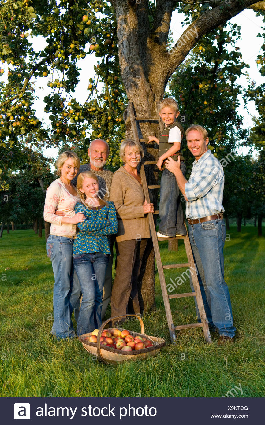 Family of three generations by ladder and apple tree, smiling, portrait - Stock Image