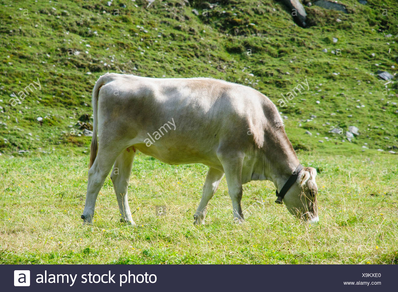 Austria, Zillertal High Alpine nature Park Hochgebirgs Naturpark near Ginzling, Tyrol Stock Photo