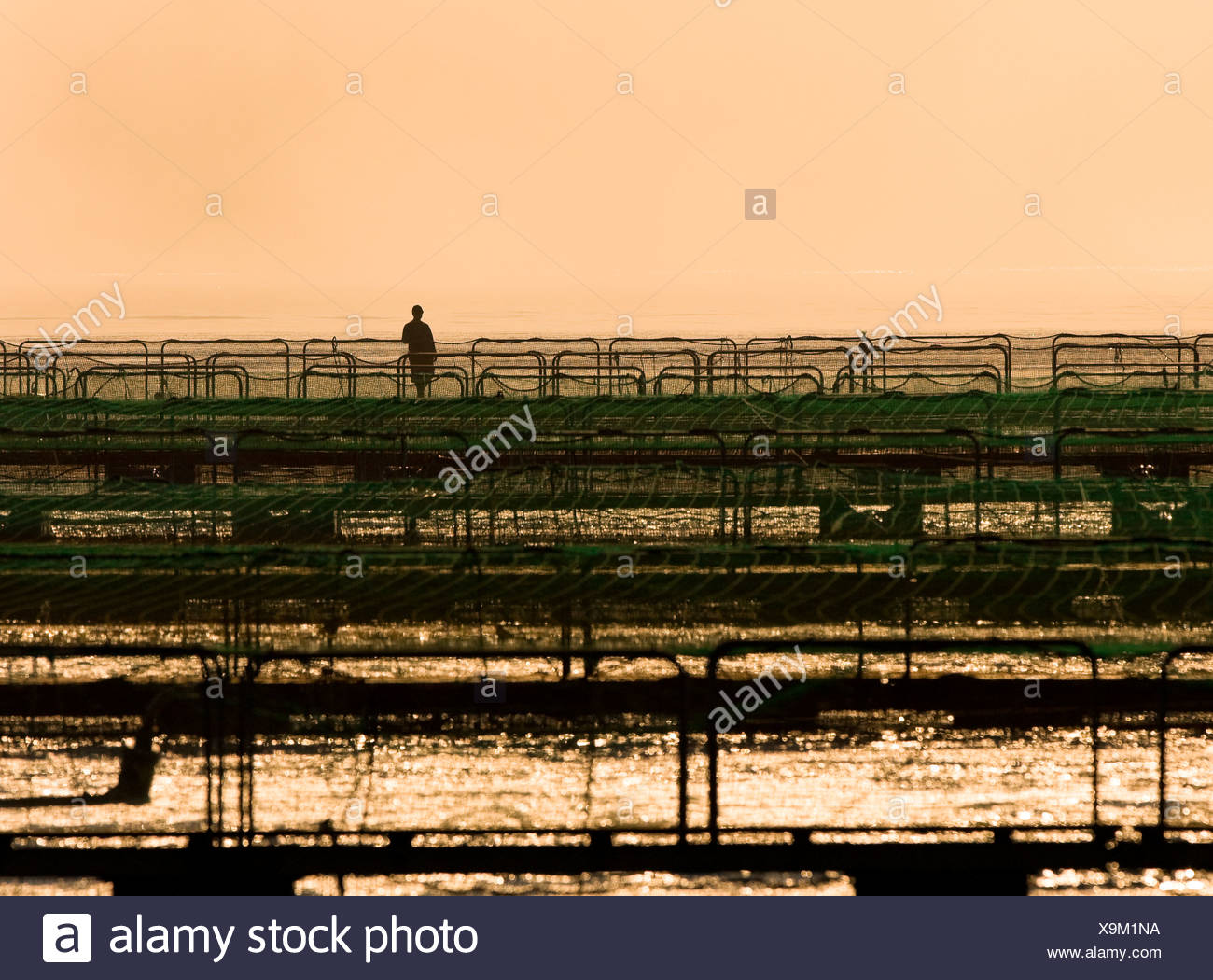 Lone fishfarm worker surveys his fish-pens in early morning light.  Nootka sound area Northern Vancouver Island British Columbia - Stock Image