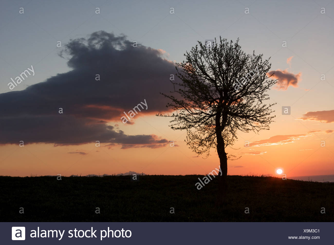 single tree silhouetted against sunset sky, Southern Italy - Stock Image
