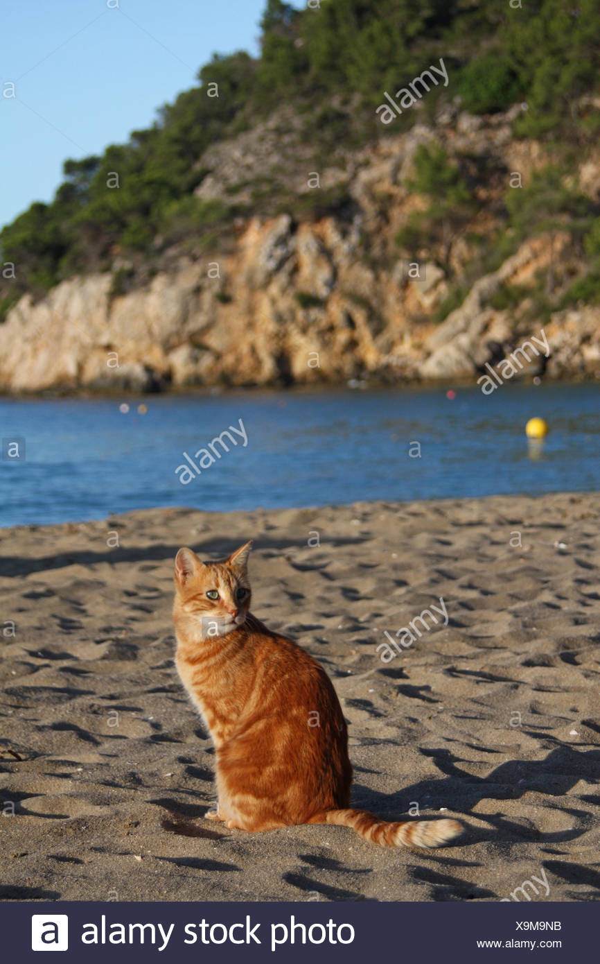 domestic cat at the beach Stock Photo