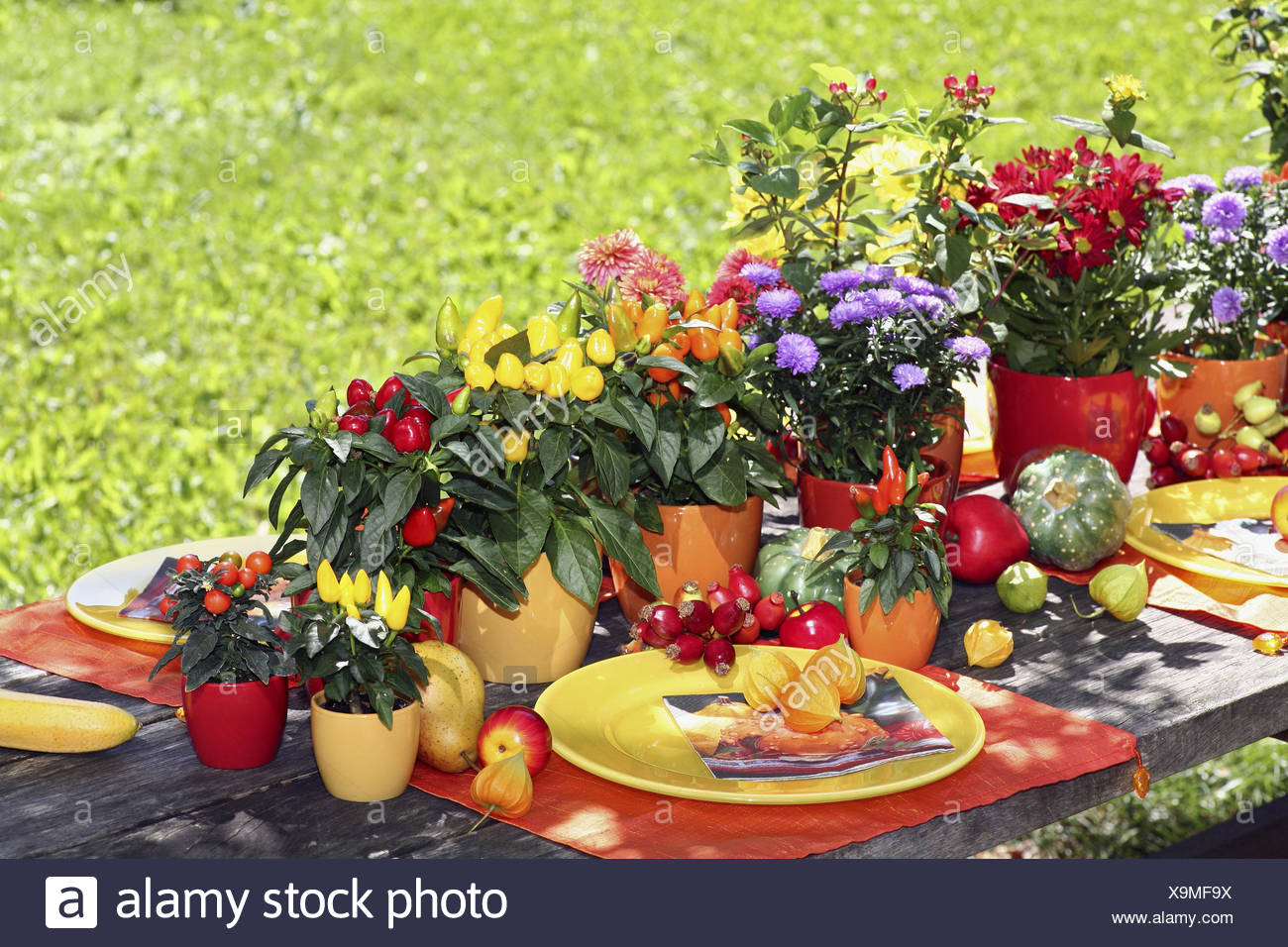 Garden table, decorated, autumnally, covered, brightly, fruits, flowers, vegetables, garden, table, late summer, season, autumn, pumpkin, rose hips, Physalis, asters, flowerpots, plates, paprika plant, chrysanthemum, Johanniskraut, yellow, orange, mauve, - Stock Image
