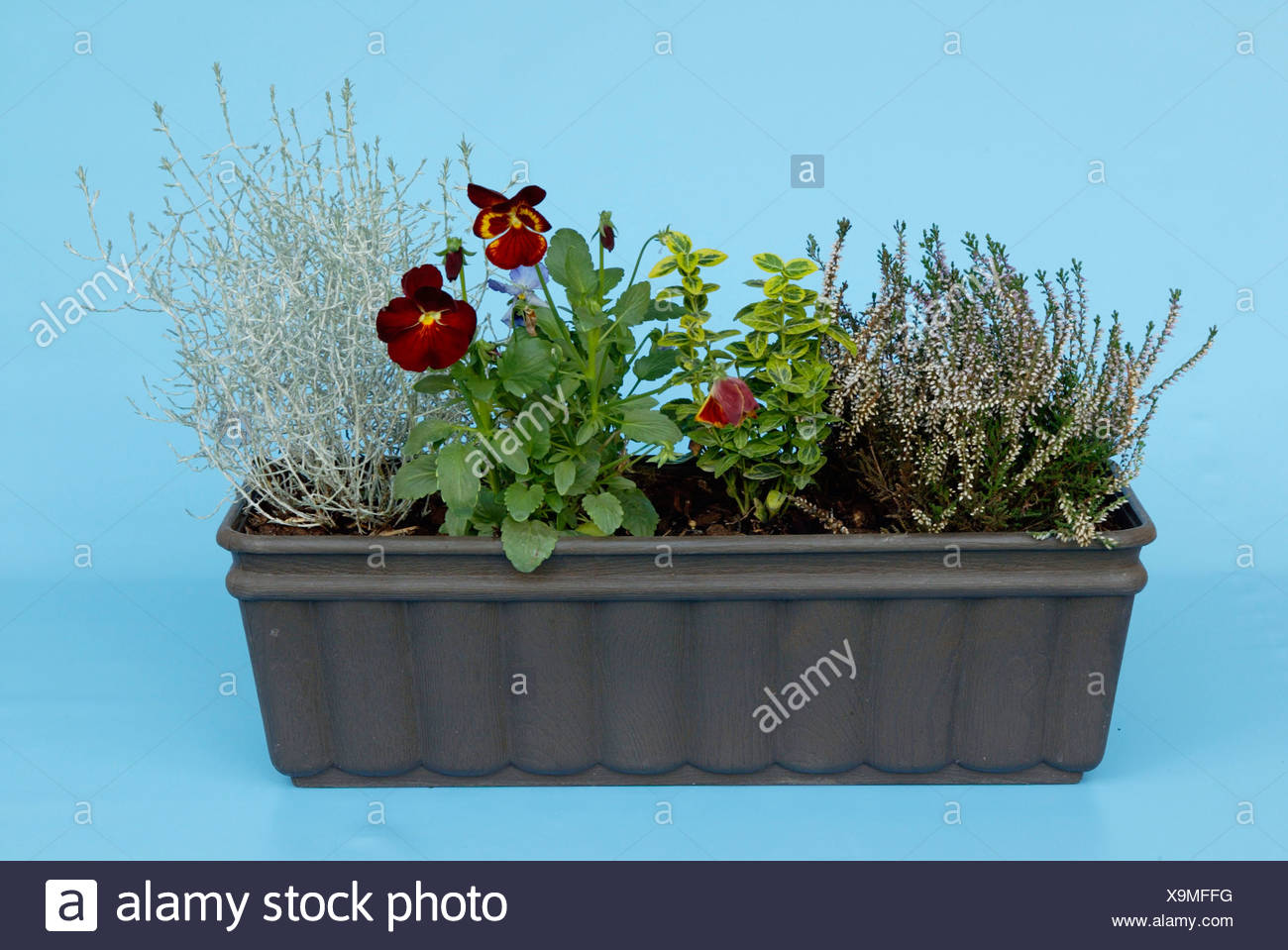 Window Box with flowers / Bepflanzter Blumenkasten - Stock Image