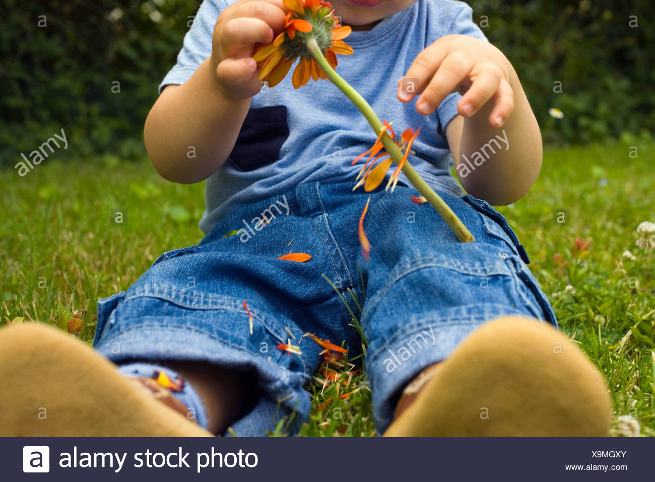 Baby boy picking petals off a flower Stock Photo: 281350131 - Alamy