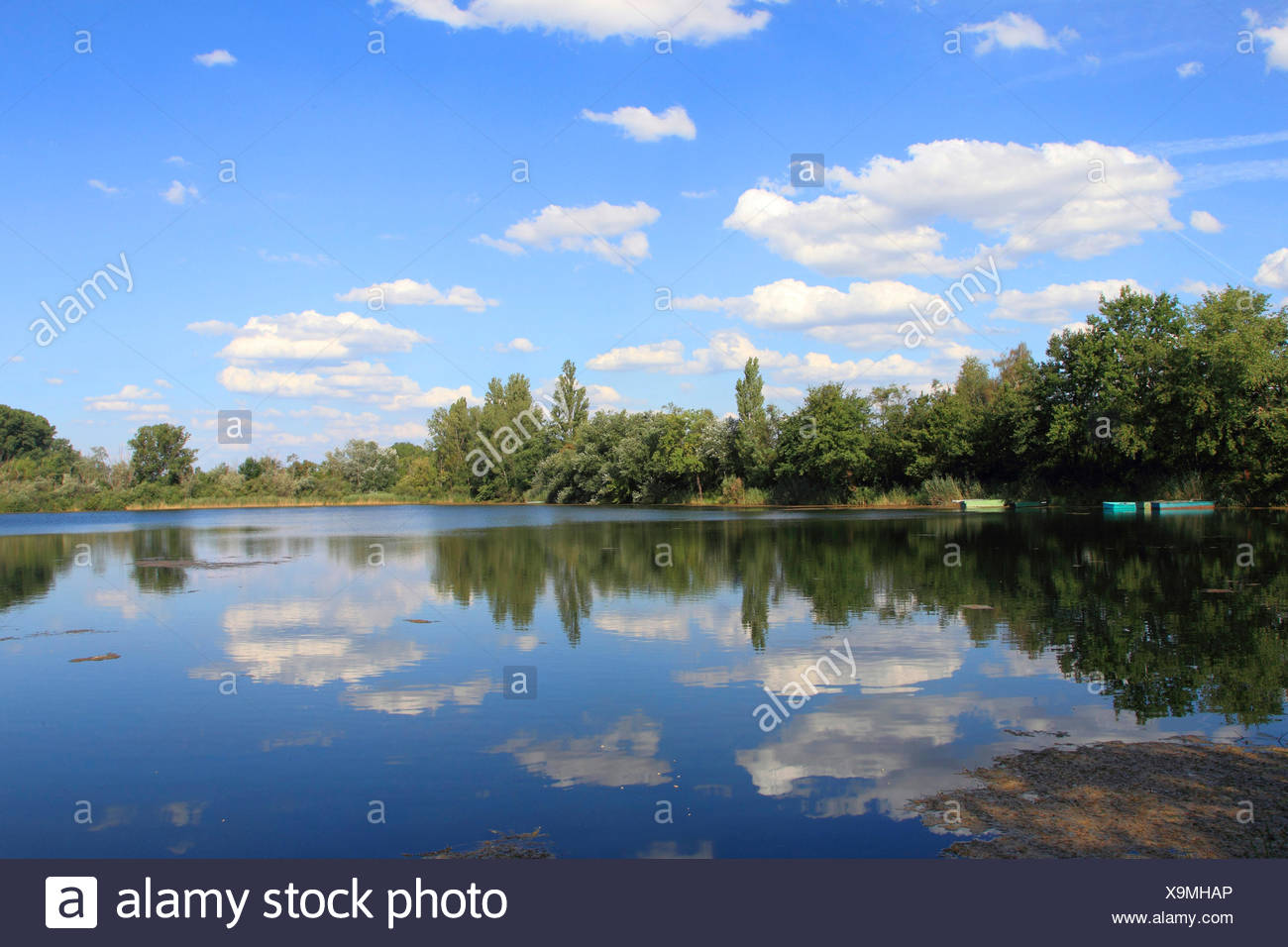 oxbow lake Altrhein in summer, Germany - Stock Image