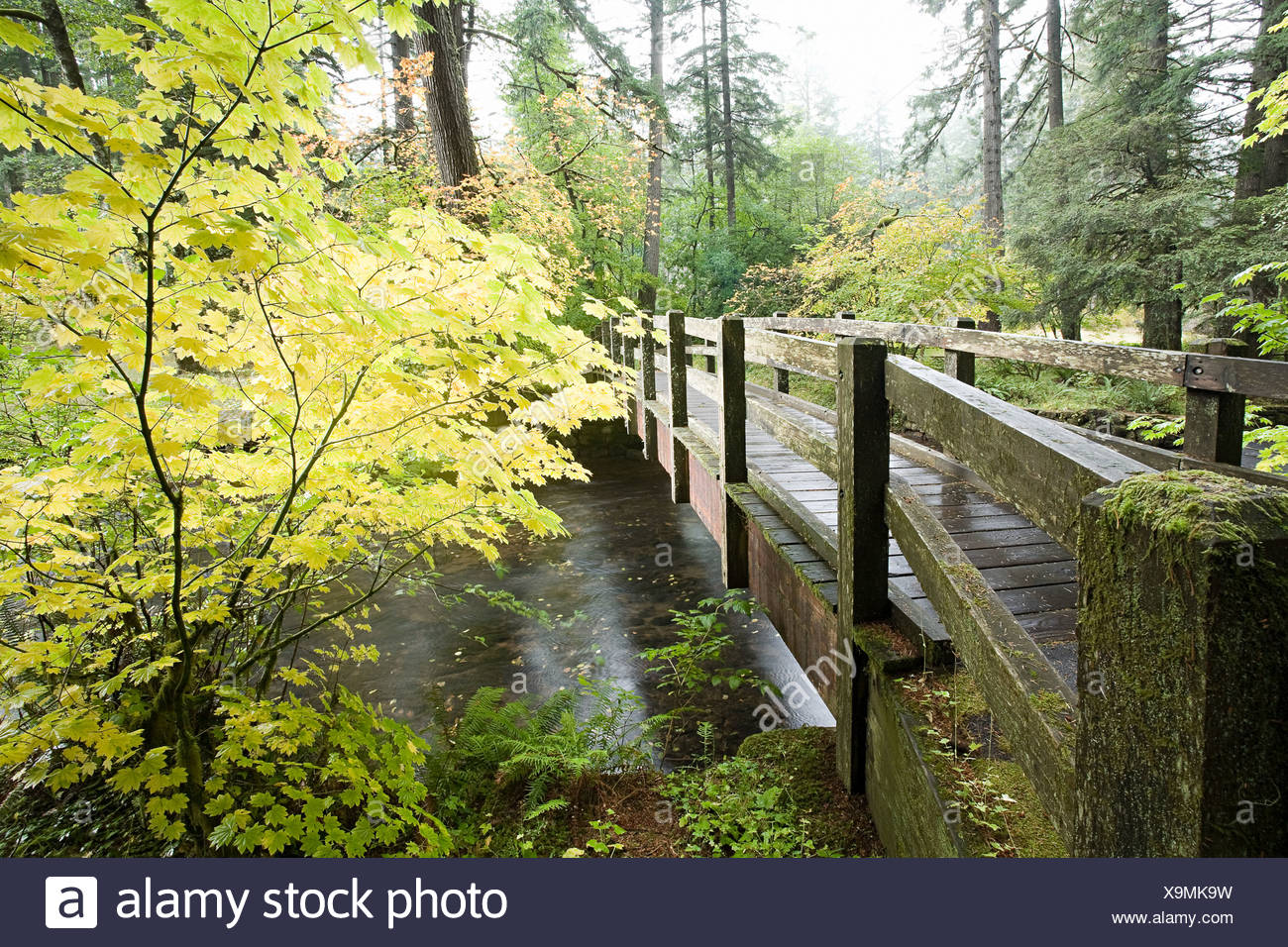Wooden bridge in silver falls state park - Stock Image