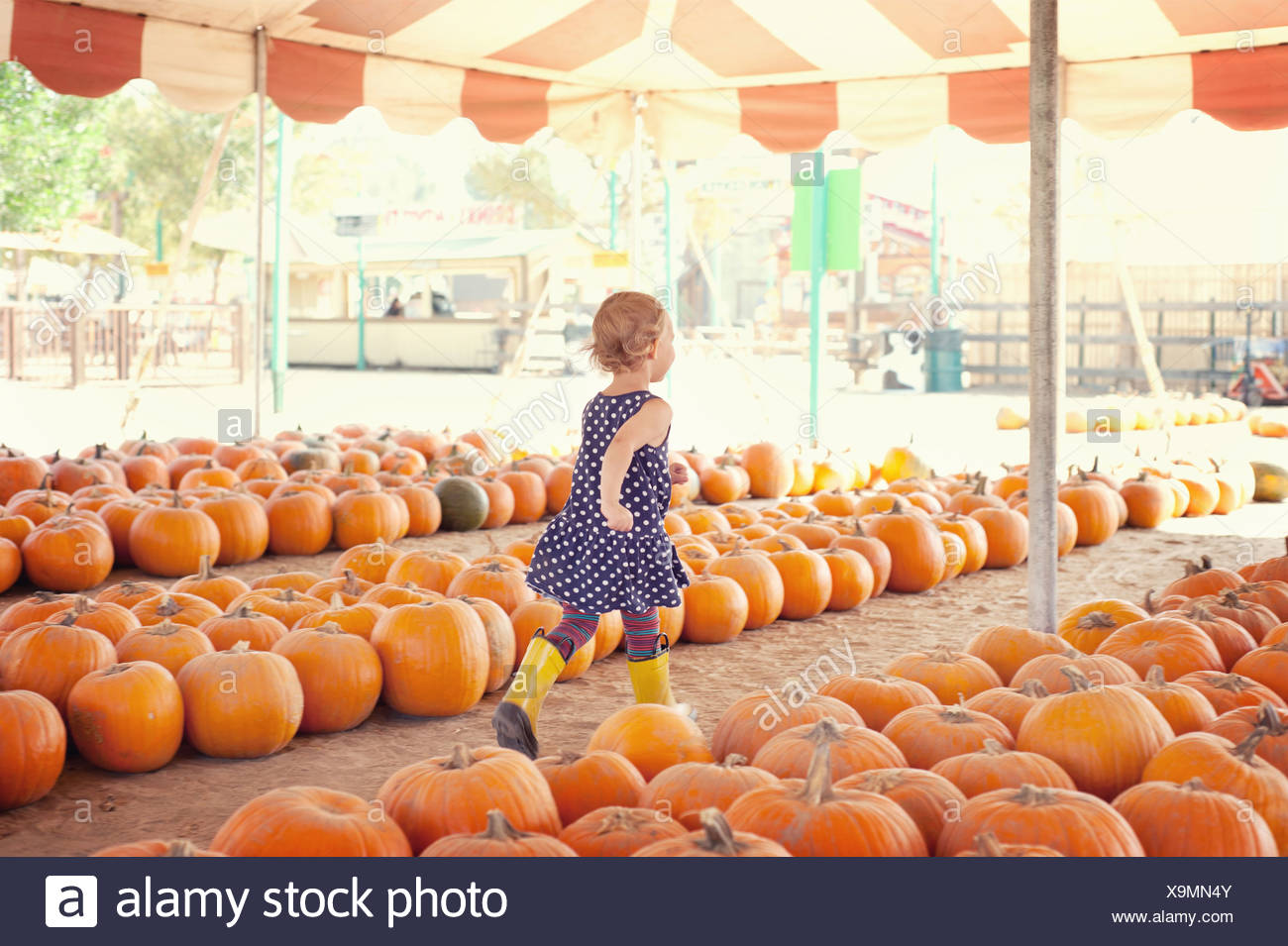 Girl running through pumpkins - Stock Image