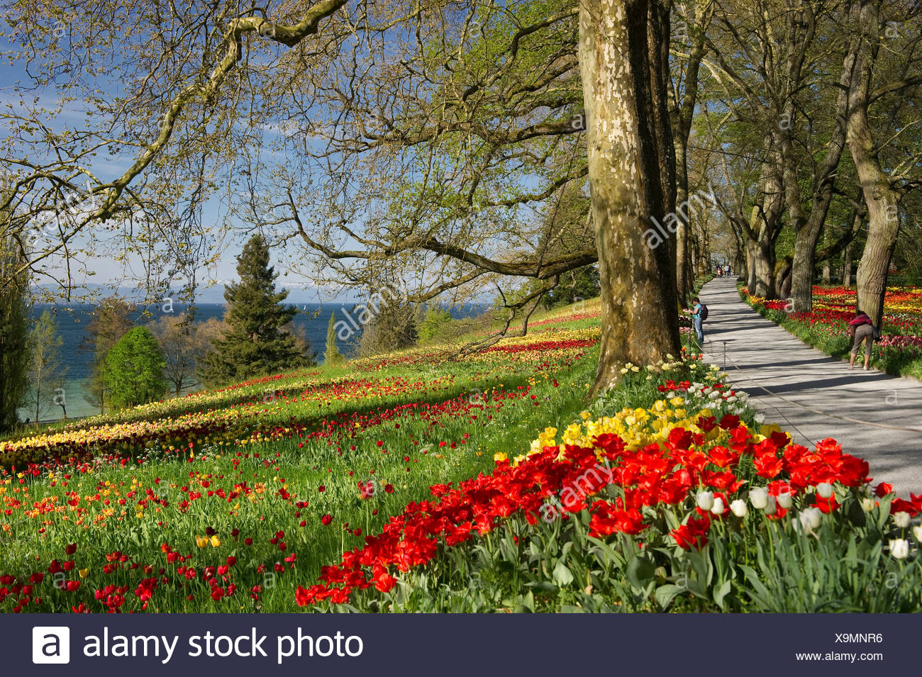 Flowers on a spring meadows, Insel Mainau, Konstanz, Baden-Württemberg, Germany - Stock Image