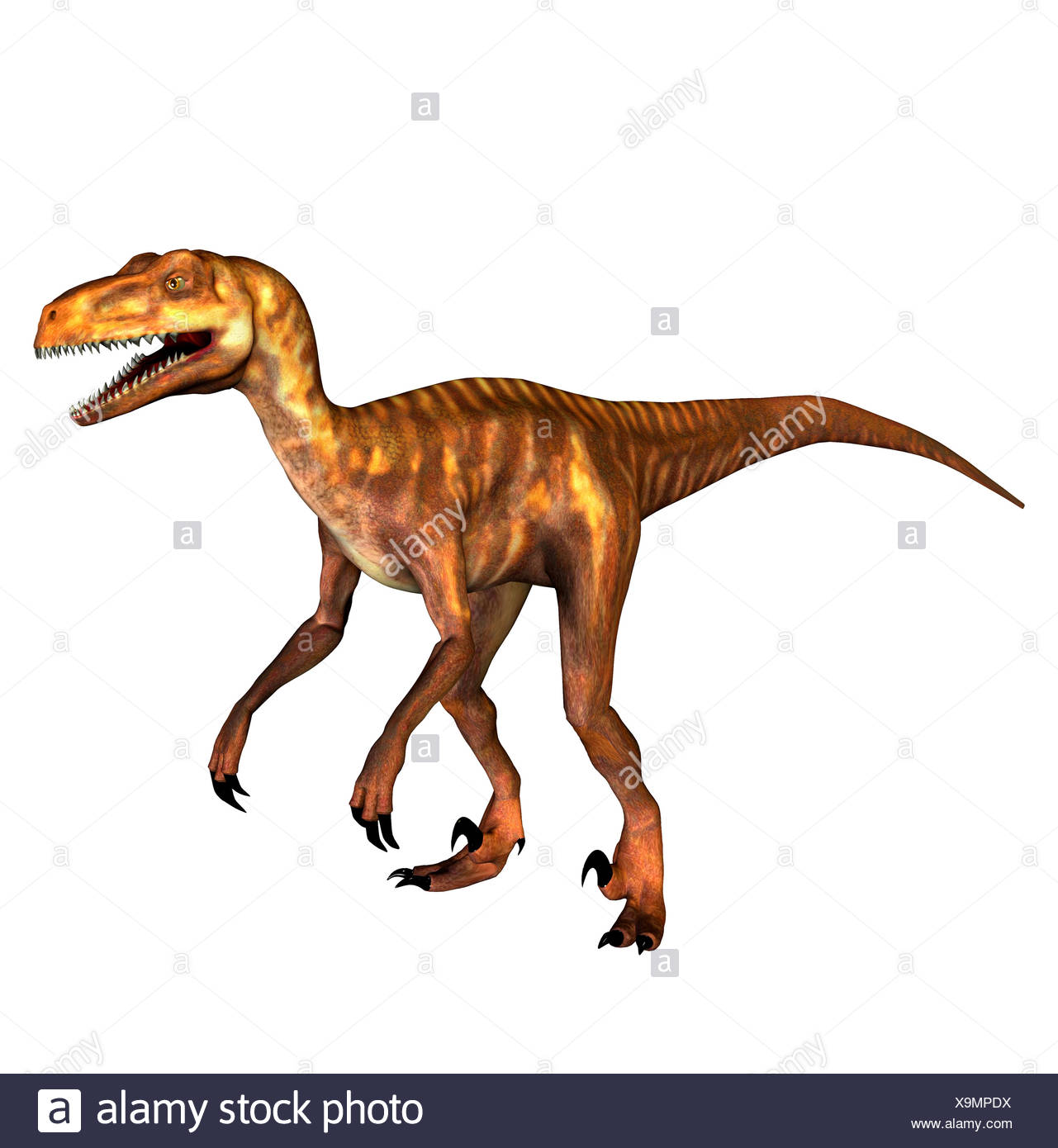 The Deinonychus occurred also terrible claw geannt in the lower Cretaceous period. The second foot toe approx. 13 cm long and - Stock Image