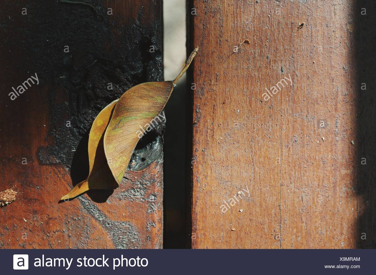 Close-Up Of Dry Leaf On Wooden Surface - Stock Image