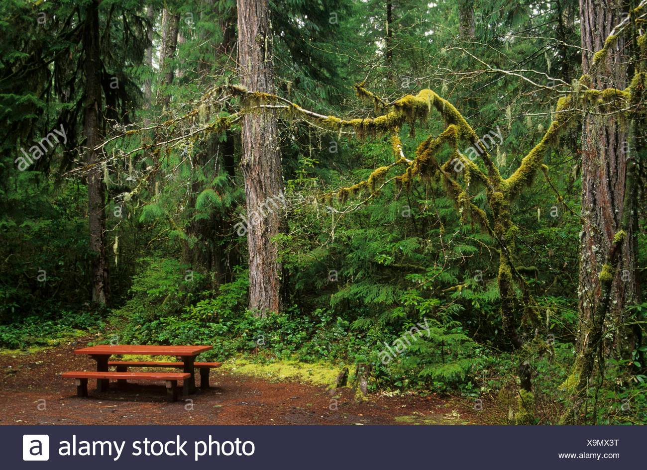 Picnic table in Humbug Campground, Willamette National Forest, Oregon. - Stock Image