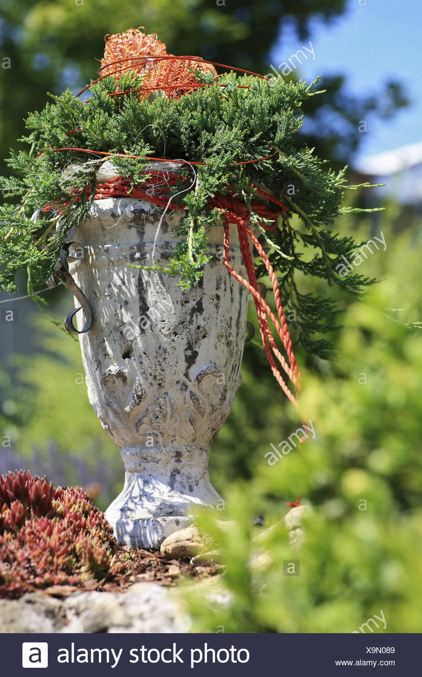 Stoneware jug, flower arrangement, Konifere, Banksia, cup, All Saints' Day, tomb, tomb jewellery, autumn, pot, grief, green, cemetery, mood, solemnly, holiday, amphora, stoneware, ceramics, dry flowers, decoration, - Stock Image