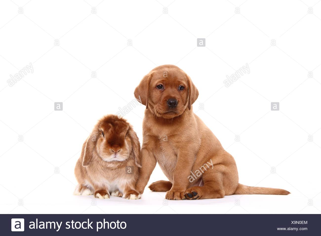 puppy and rabbit - Stock Image