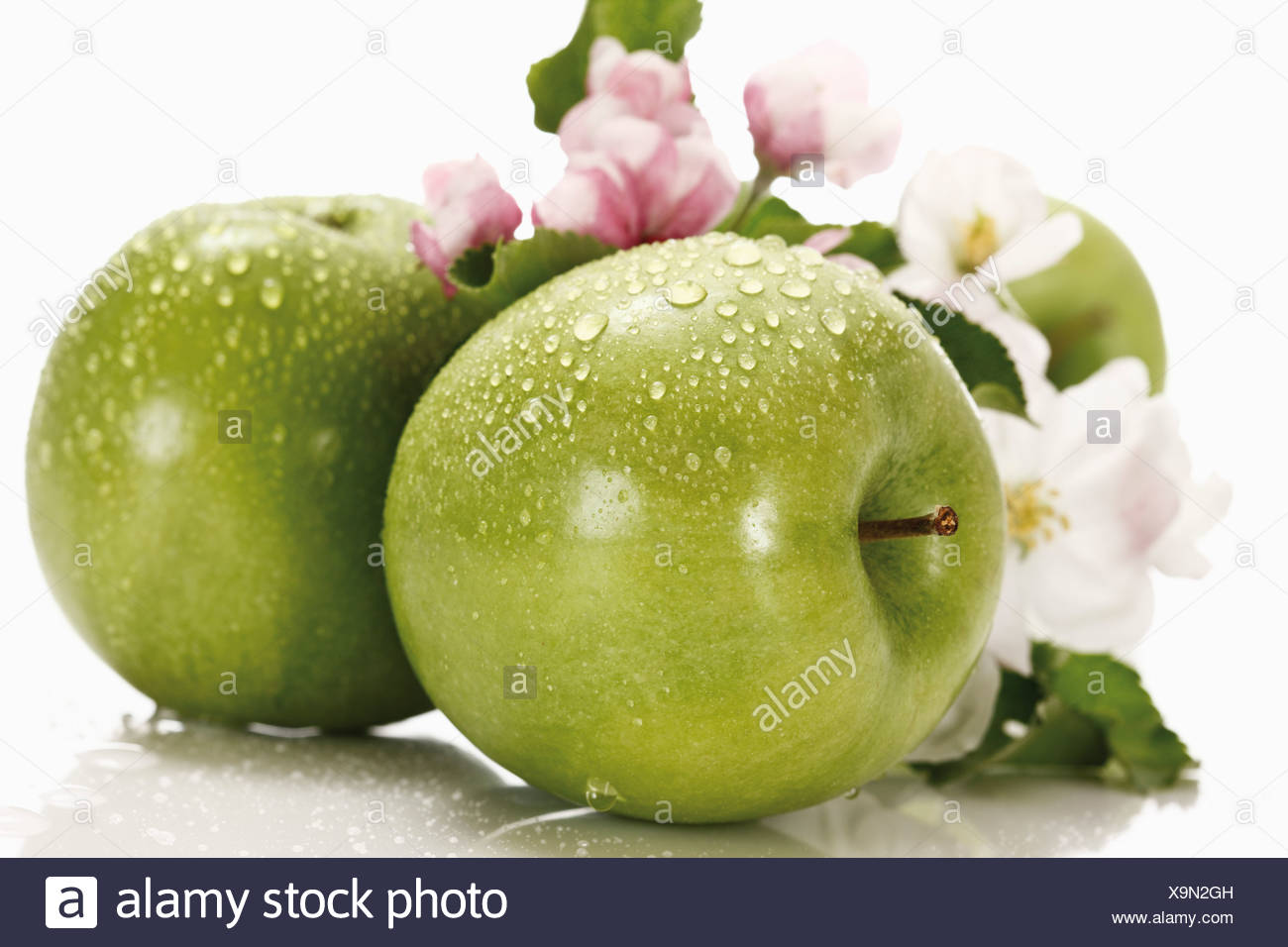 Green apples with water droplets, in background apple blossom, close-up - Stock Image