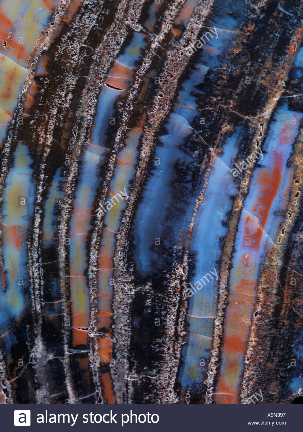 Polished slab petrified wood Chinle Formation near Holbrook Arizona. - Stock Image