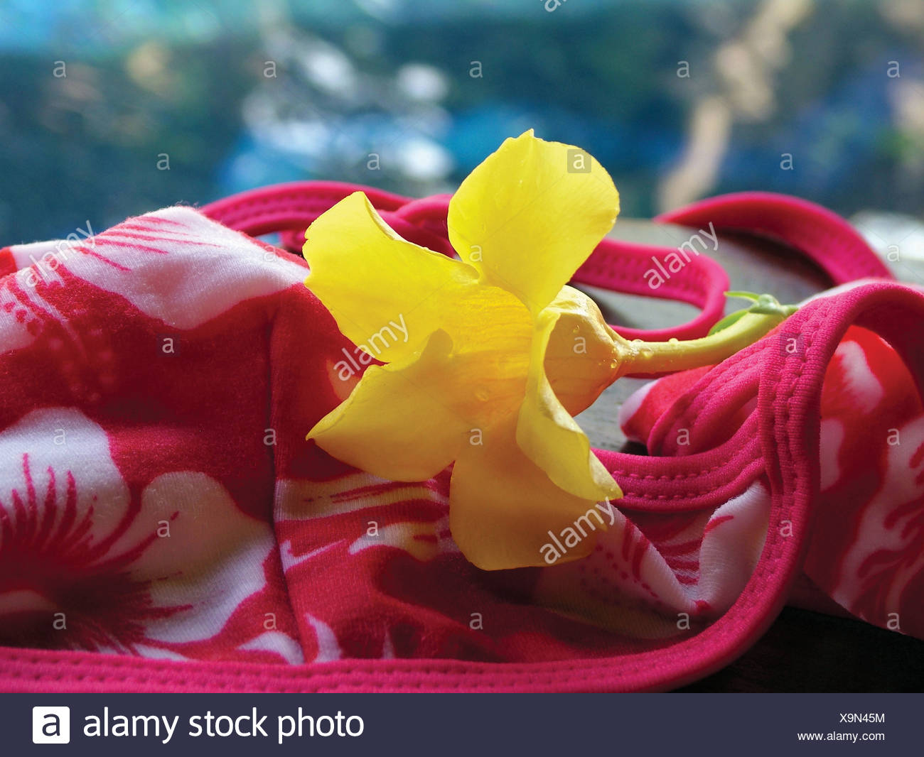 808ed2405ad High angle view of a buttercup flower on a bikini top Stock Photo ...