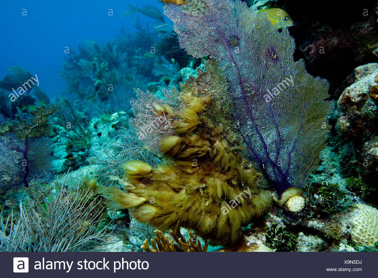 Underwater growth of algae. - Stock Image