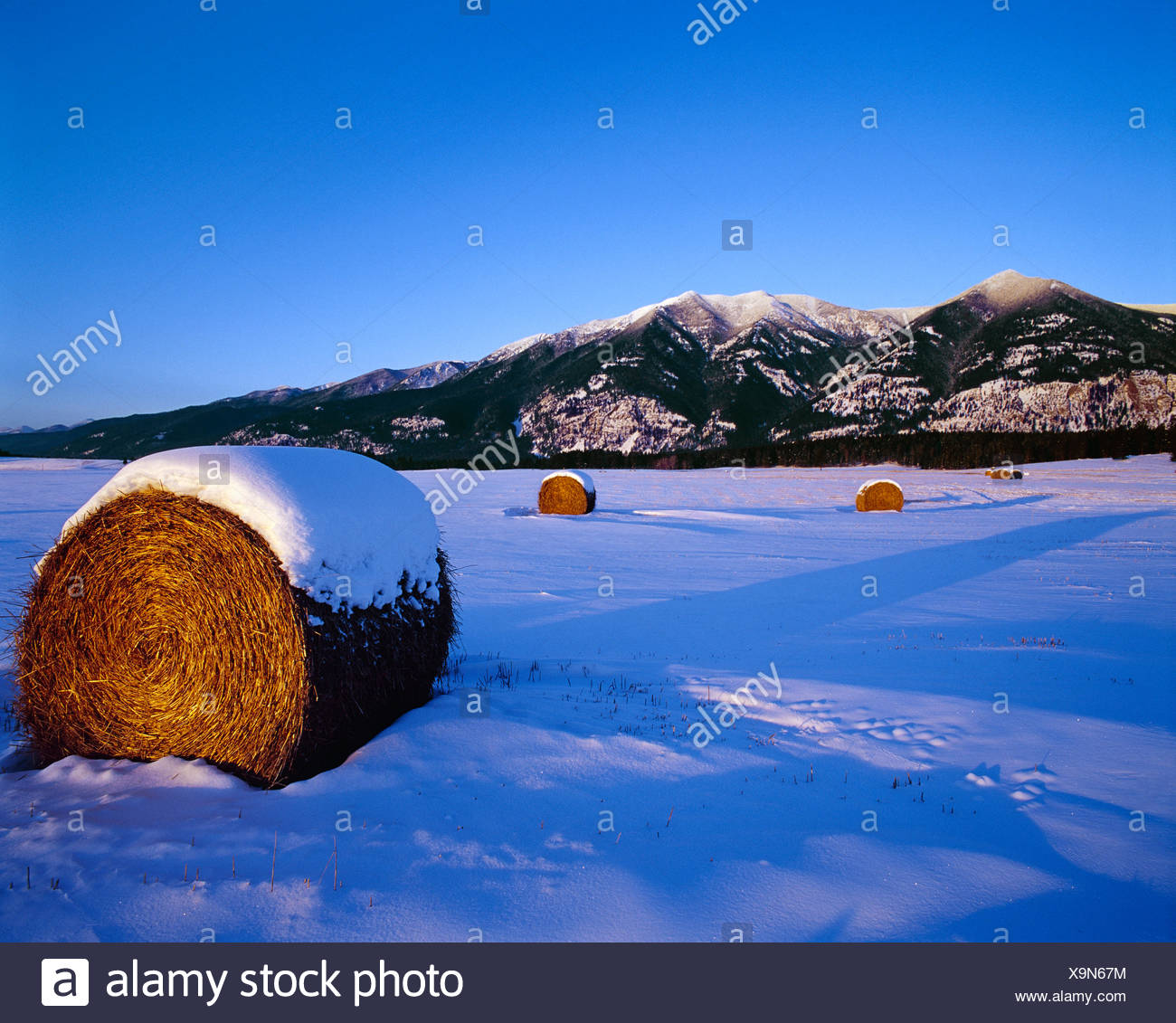 Agriculture Round Hay Rolls In A Snow Covered Field With