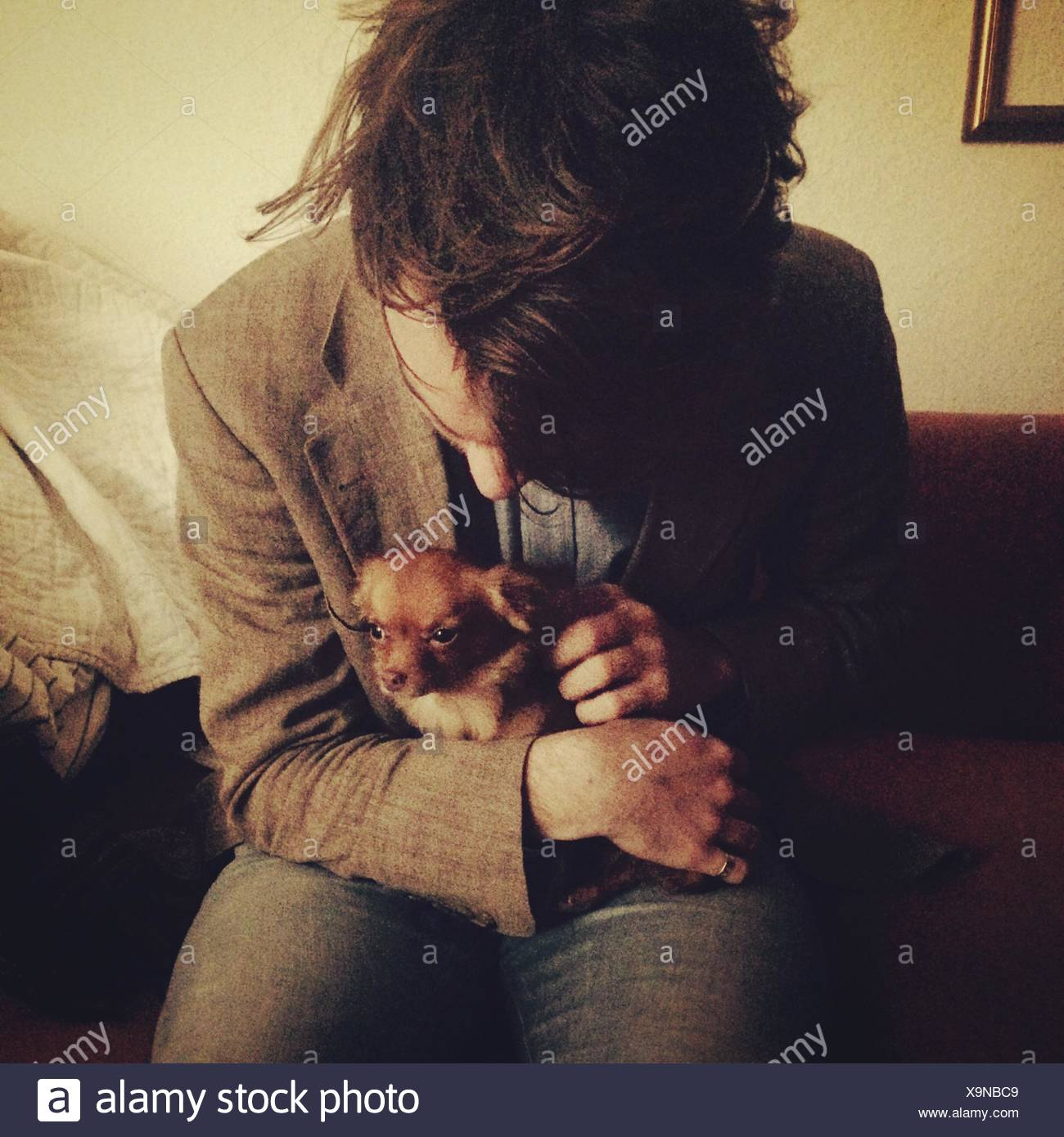 Young Man Petting Chihuahua Sitting In Lap - Stock Image