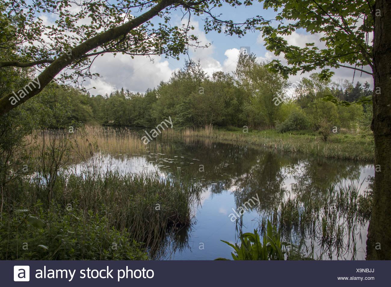 ALTA: Norfolk arboretum