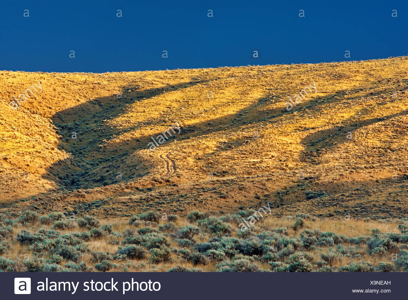 Storm light on grasslands, Near Cache Creek, British Columbia, Canada - Stock Image