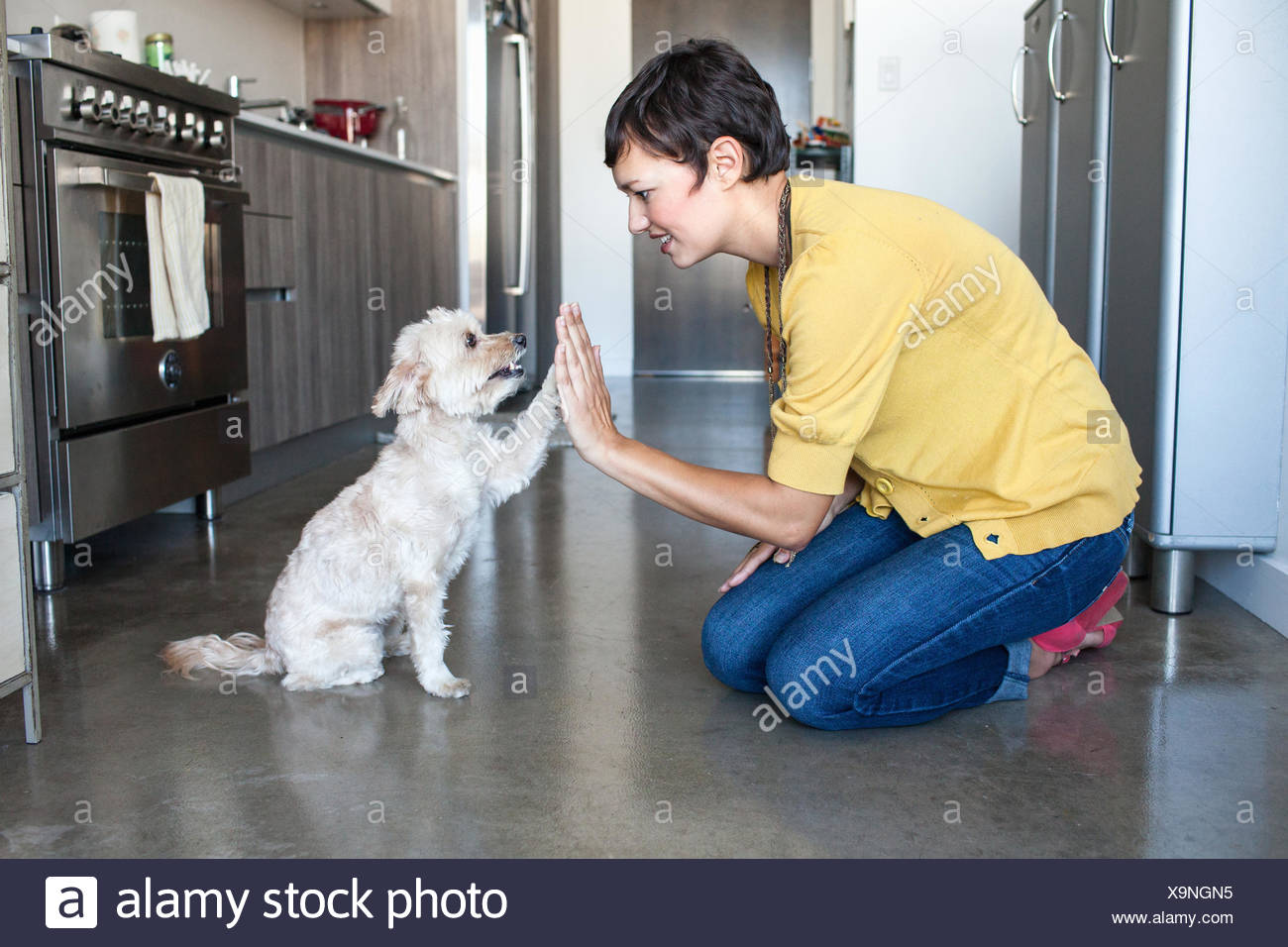 Young woman giving dog a high five in kitchen - Stock Image
