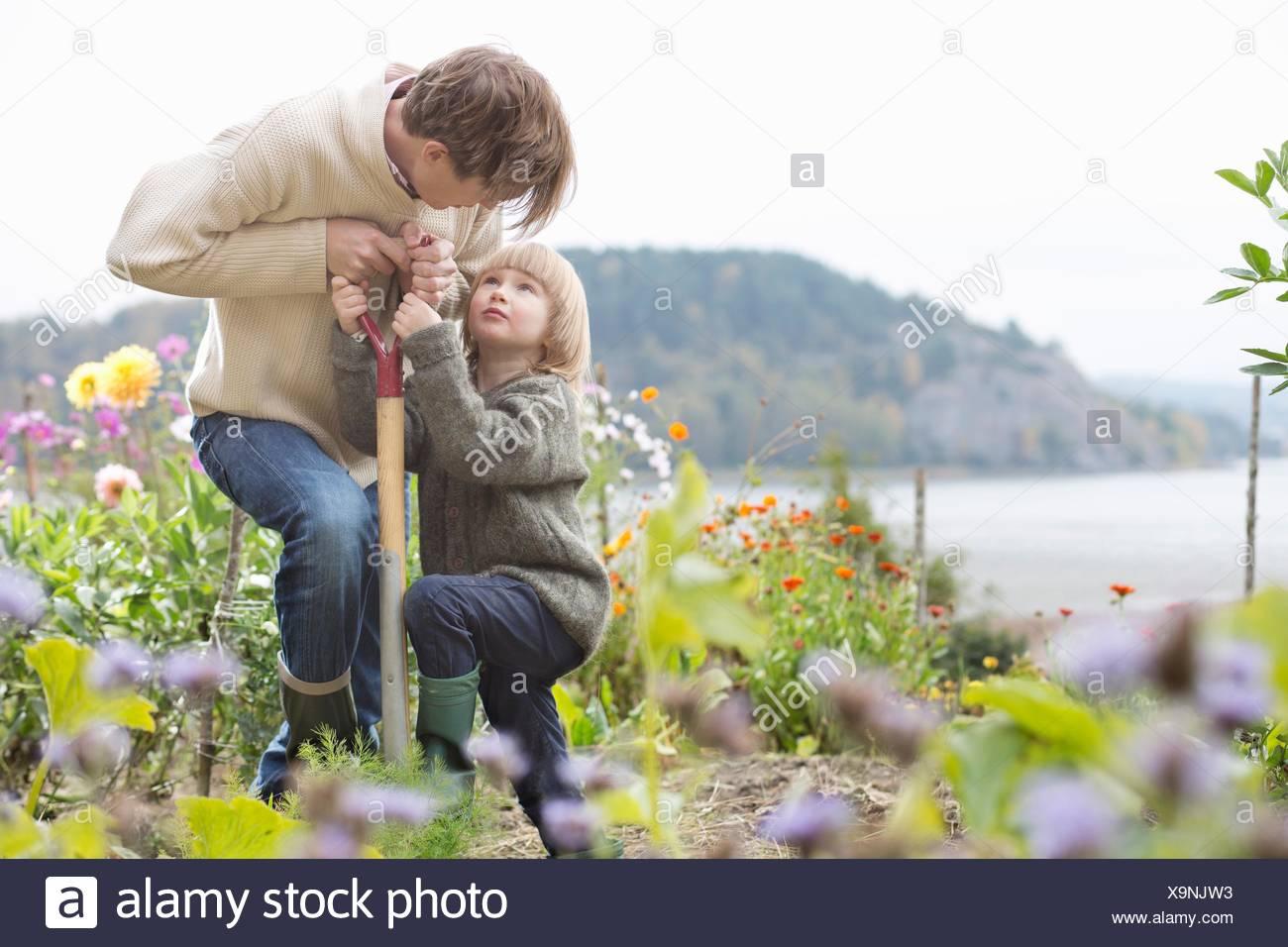 Mature man and son digging organic garden, Orust, Sweden Stock Photo